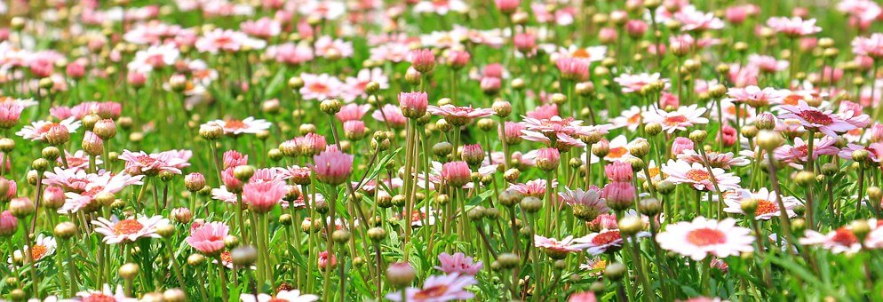 pink and white flowers in a meadow.