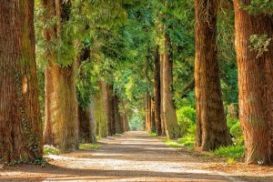 May's Most Loved Marvels - avenue of trees