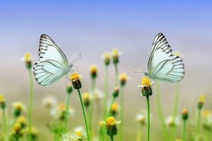 May's Most Loved Marvels - butterflies on wildflowers